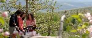 Frühlingsangebot in Val di Non - Trentino