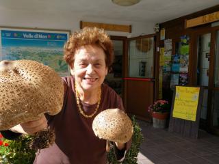 La stagione dei funghi è arrivata!Lanciati nell
