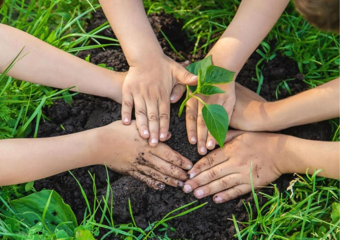 studenti piantano pianta