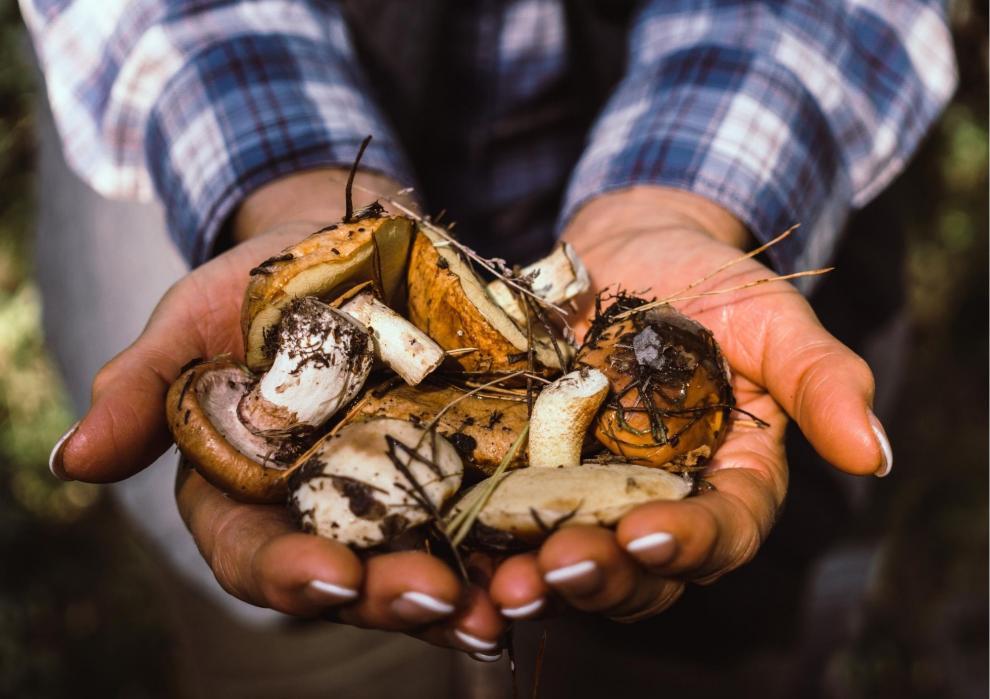 Promozione Andiam per funghi in Predaia!