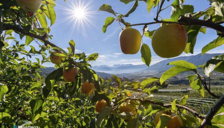 Promozione Colori autunnali e profumo di mela all inclusive