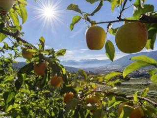 Colori autunnali e profumo di mela all inclusiveLanciati nell
