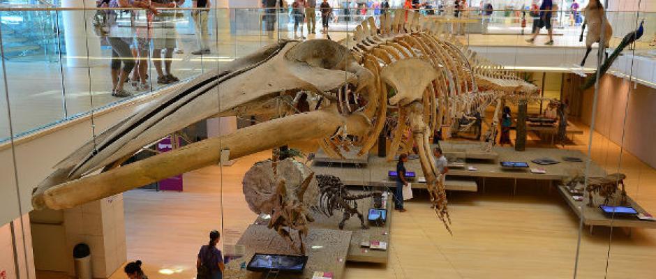 Leggi articolo Museo della scienze MuSe